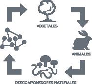 Metabolismo Biológico